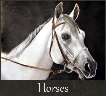 gallery-horses