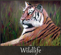 gallery-wildlife
