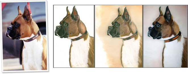 dog-portrait-progression